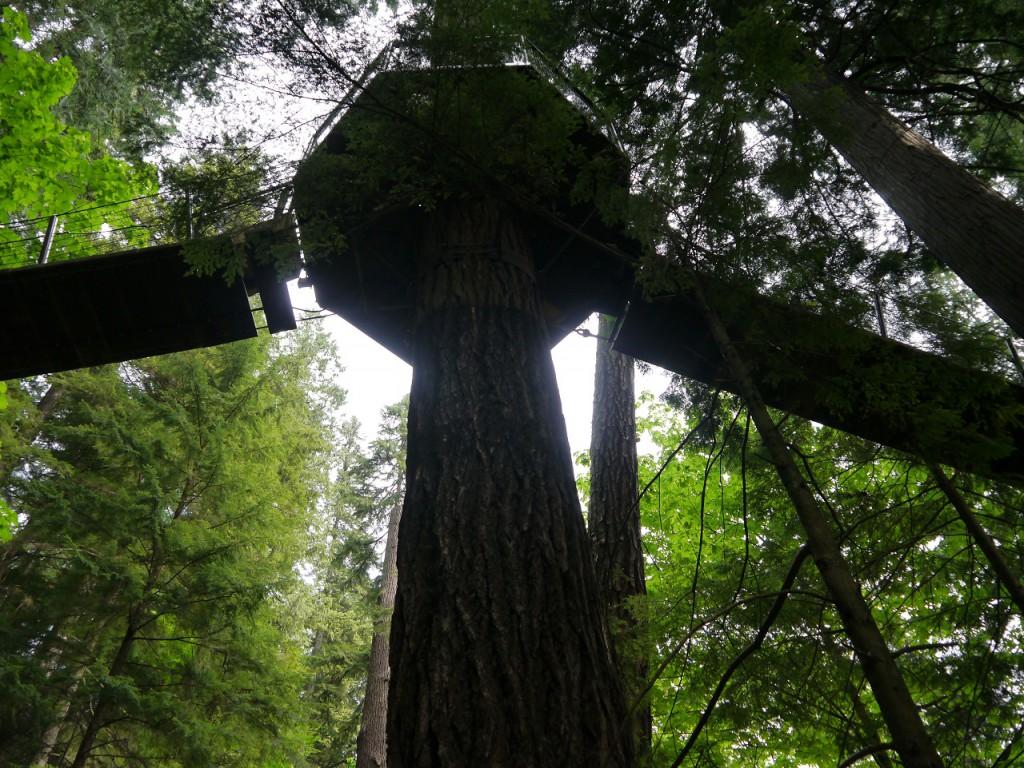 Von solchen Baumbebauungen haben wir in unserer Jugend getraeumt.