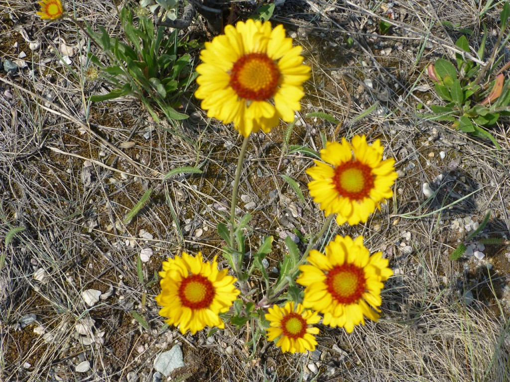 ...und immer wieder schoene Wildblumen!