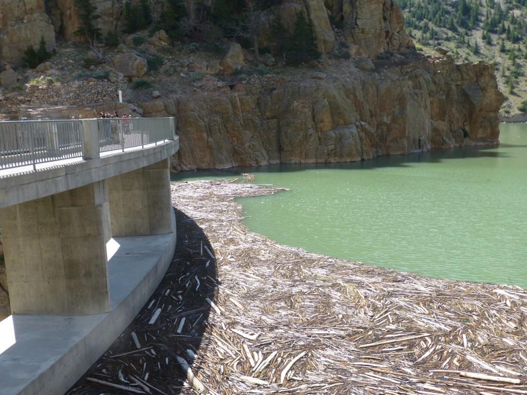 Holzansammlung vor der Staumauer des Buffalo Bill Staudammes.