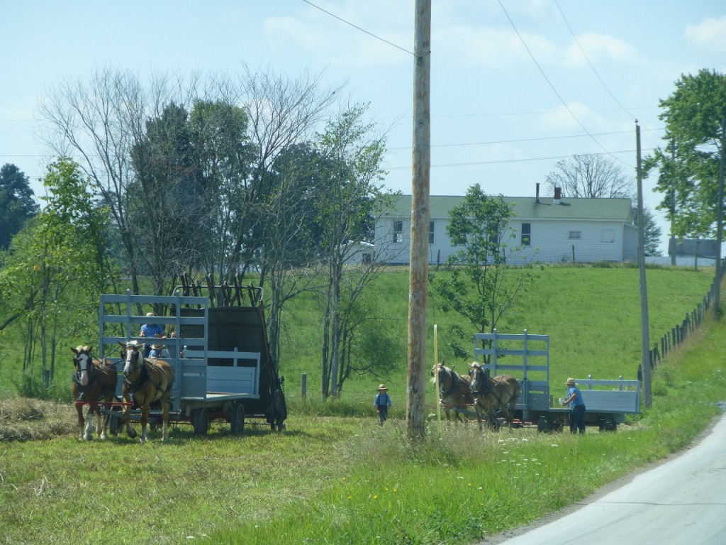 Amish people bei der Ernte.
