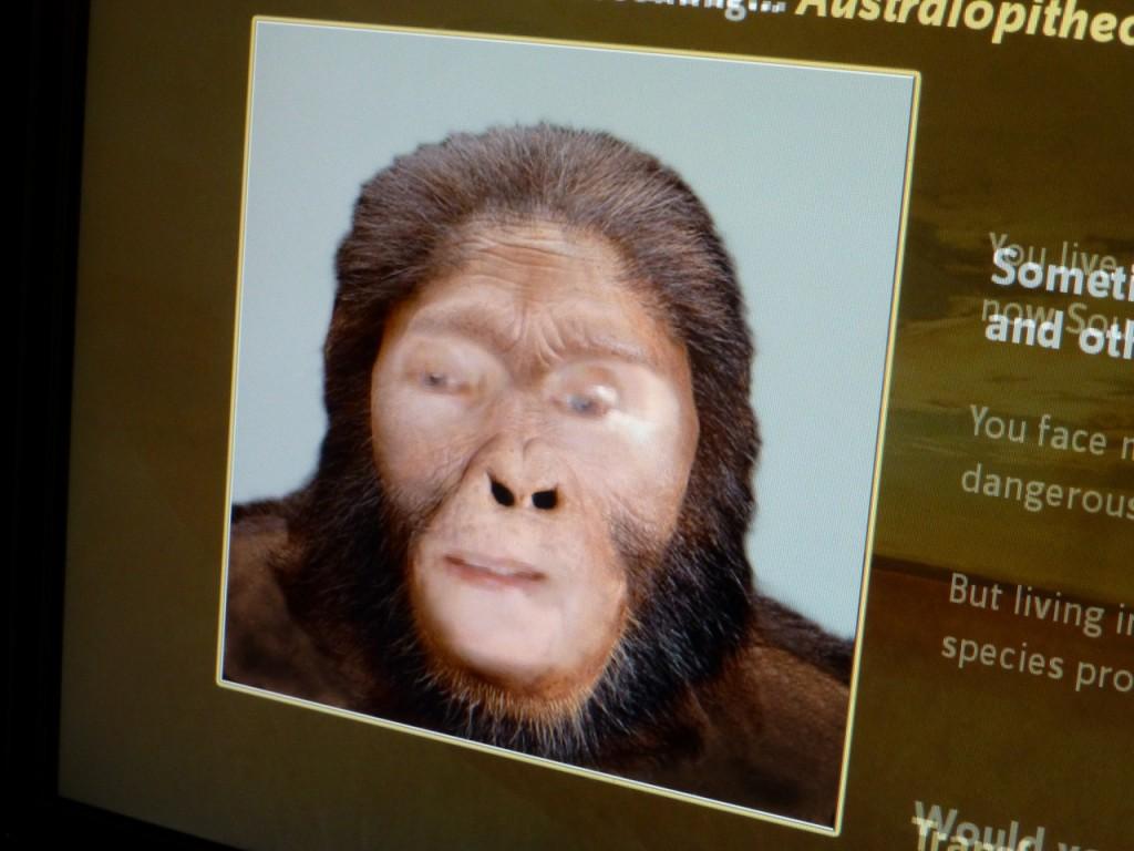 Inge 2 bis 3 Mio Jahre zurückgeformt zum Australopithecos Africanus!