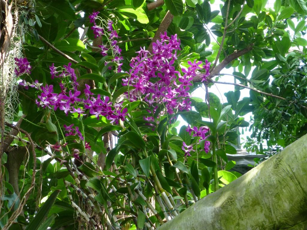 P1110161Bummel durch den Botanischen Garten